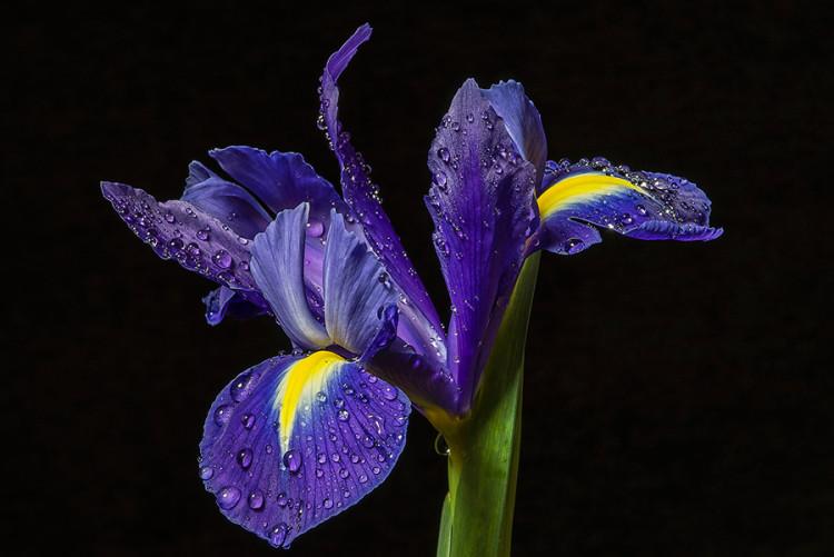 Meeting-Iris